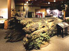 display inside the Forest History Center